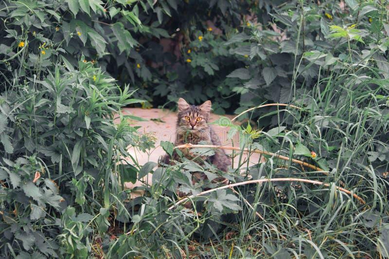 Katze in den Dickichten Eine Katze stockbilder