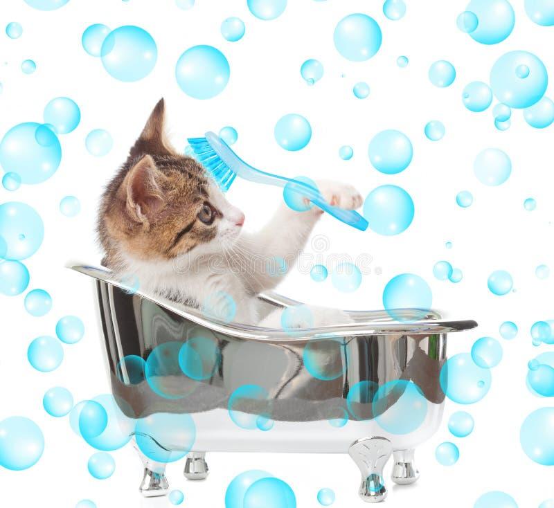 Katze in der Badewanne lizenzfreie stockfotos