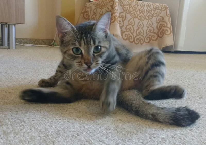 Katze in der Bewegung lizenzfreie stockfotografie
