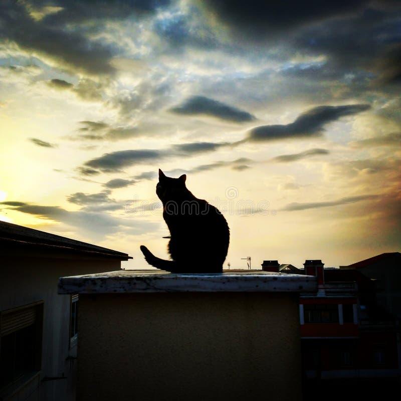 Katze an der Dämmerung lizenzfreies stockfoto
