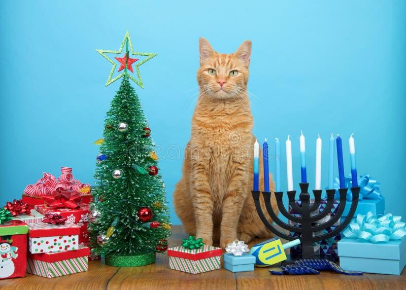 Katze der getigerten Katze, die zwischen Weihnachts- und Chanukka-Dekorationen sitzt stockbild