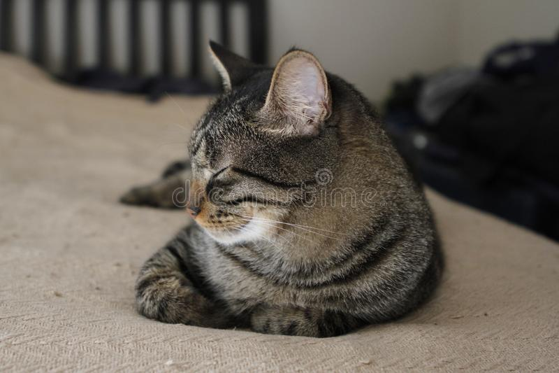 Katze der getigerten Katze entspannt sich auf Bett stockbilder