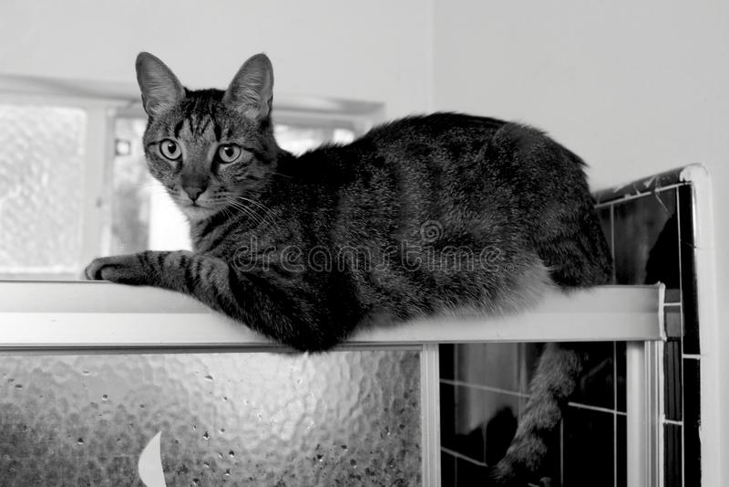 Katze der getigerten Katze entspannt sich auf Dusche-` s Schiebetür lizenzfreies stockfoto