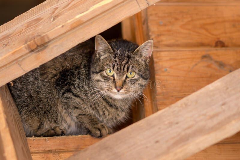 Katze der getigerten Katze im Dachboden eines Holzhauses stockfotografie
