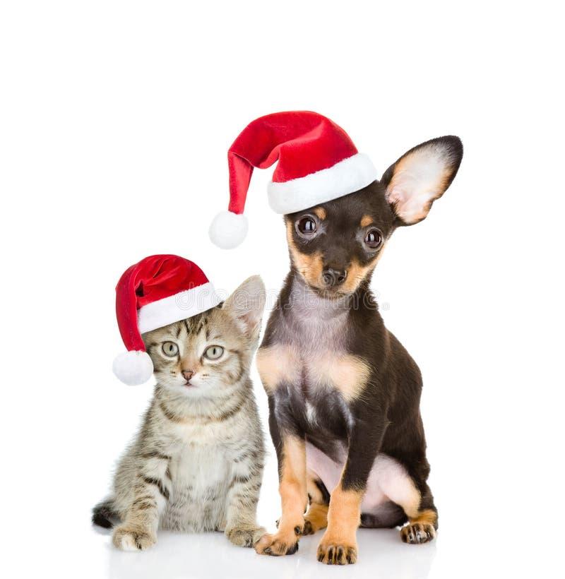 Katze der getigerten Katze und SpielzeugTerrier-Hündchen, das zusammen in roten Sankt-Hüten sitzt Lokalisiert auf Weiß lizenzfreie stockfotos