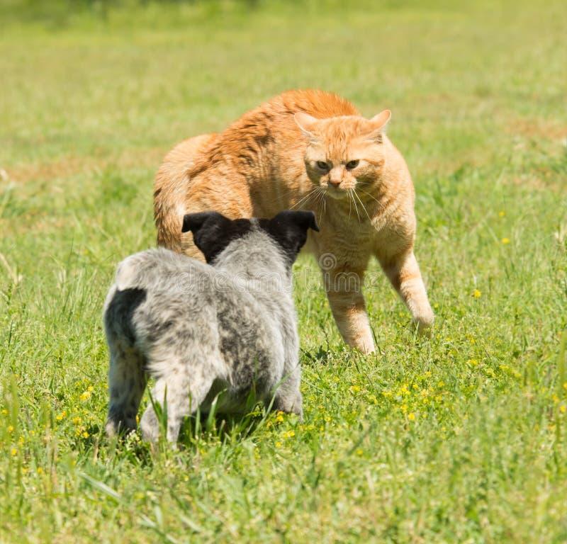Katze der Ingwergetigerten katze, die einem Welpen sagt sich zurückzuziehen lizenzfreie stockfotografie