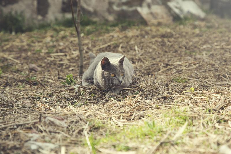 Katze in der Natur lizenzfreie stockbilder