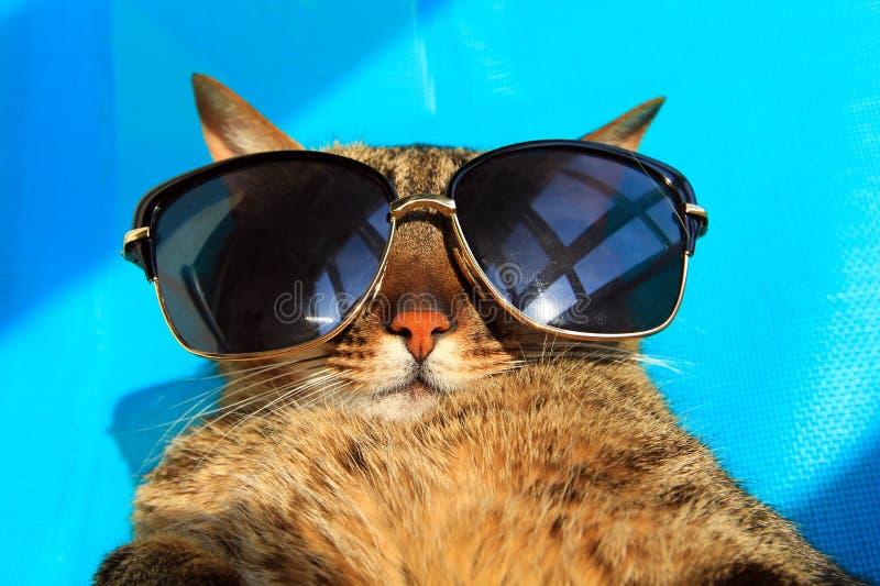 katze in der sonnenbrille stockfoto bild von katze sonnenbrille 72026084. Black Bedroom Furniture Sets. Home Design Ideas