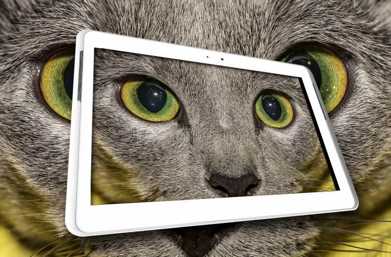 Katze in der weißen Tabelle lizenzfreie stockfotografie