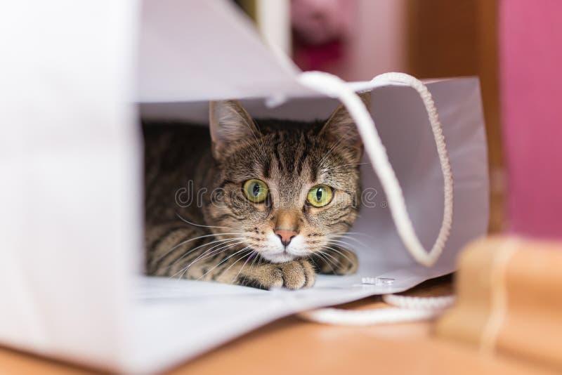Katze in der weißen Tasche stockfotografie