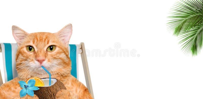 Katze, die auf deckchair sitzt und ein Cocktail genießt stockbilder