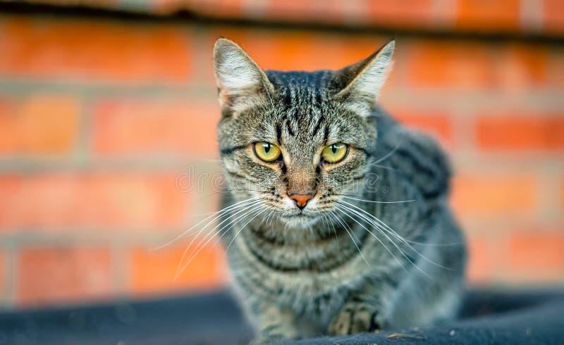 Katze, die auf dem Dach sitzt stockbild