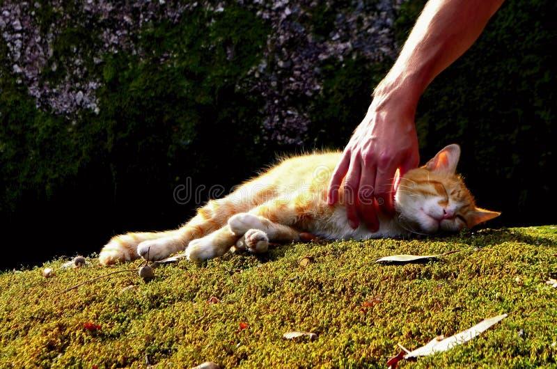 Katze, die auf dem Moos schläft stockbild