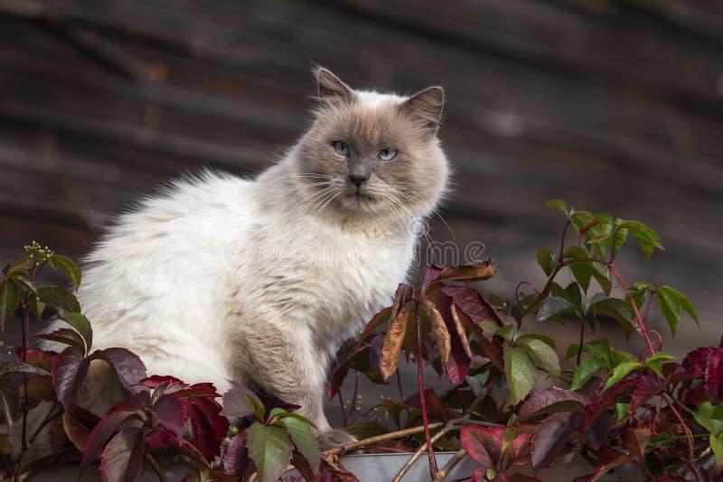 Katze, die auf dem Zaun sitzt stockbilder