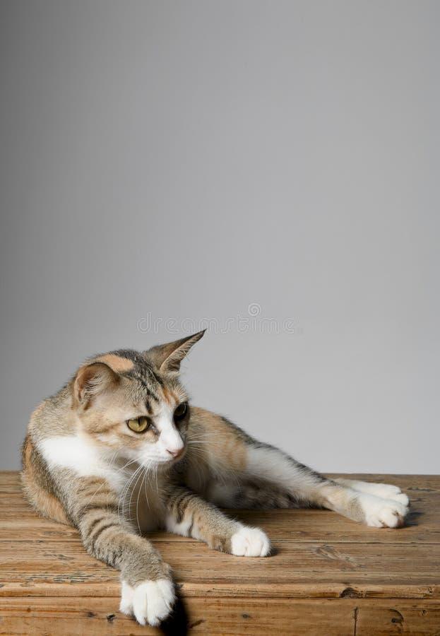 Katze, die auf eine Tischplatte legt und seitlich flüchtig blickt lizenzfreies stockbild