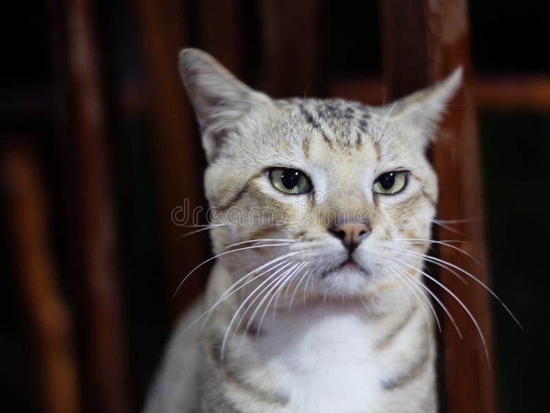 Katze, die auf einem Stuhl steht lizenzfreie stockbilder