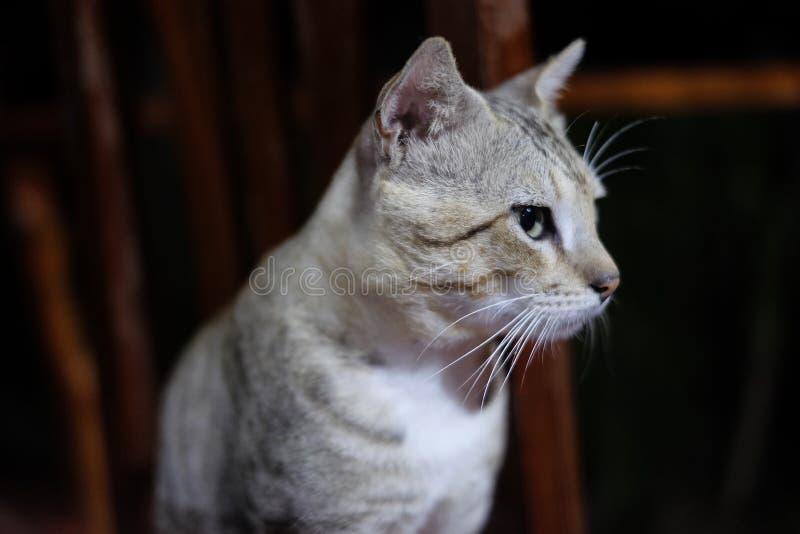 Katze, die auf einem Stuhl steht lizenzfreies stockbild