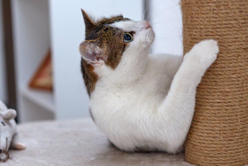 Katze, die auf einem verkratzenden Beitrag liegt lizenzfreies stockbild