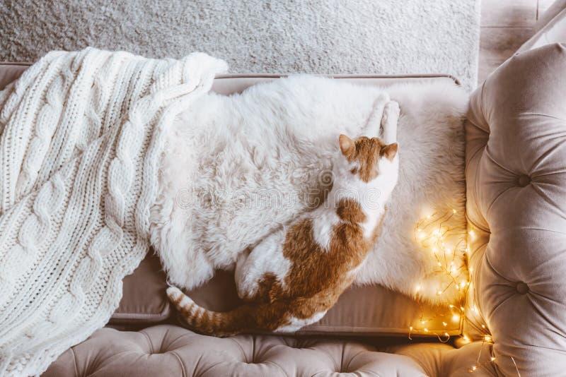 Katze, die auf einer Couch schläft stockbilder