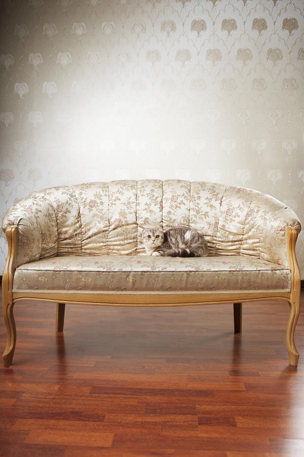 Katze, die auf einer schönen Weinlesecouch sitzt stockbild
