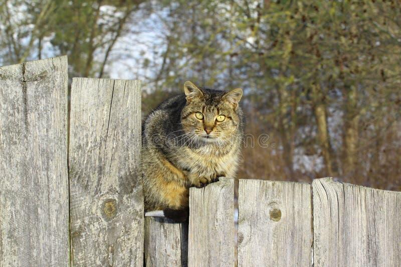 Katze, die auf fance sitzt lizenzfreies stockbild