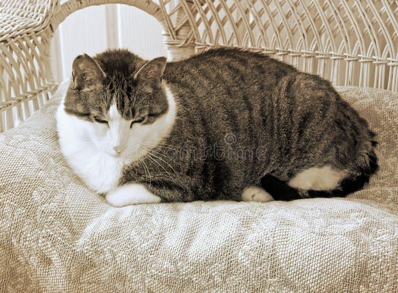 Katze, die auf gesponnene Decke auf dem Rattanbettrahmen gemütlich und zufrieden legt lizenzfreie stockfotografie