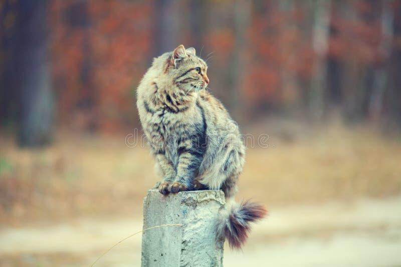 Katze, die auf konkreter Spalte sitzt lizenzfreies stockfoto