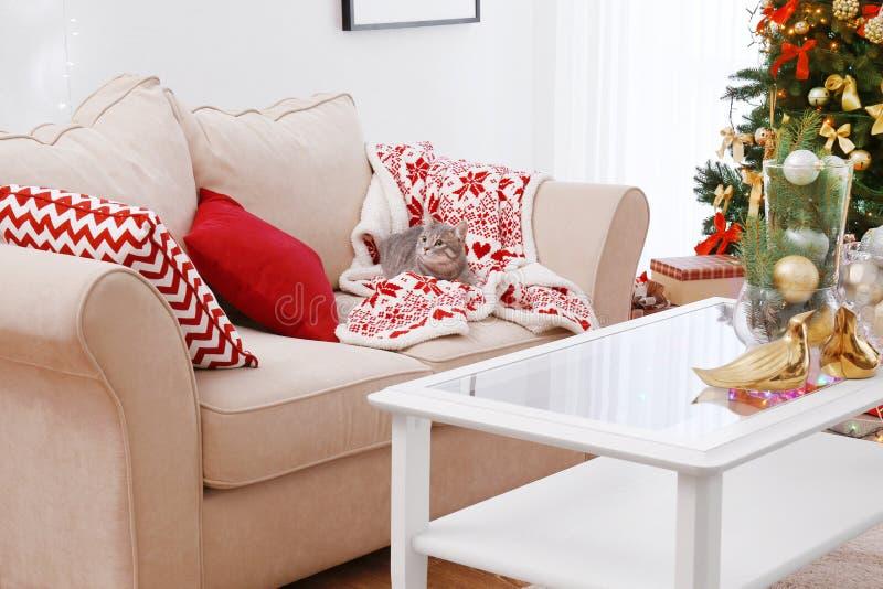 Katze, die auf Sofa im Raum verziert für Weihnachten liegt lizenzfreie stockfotos