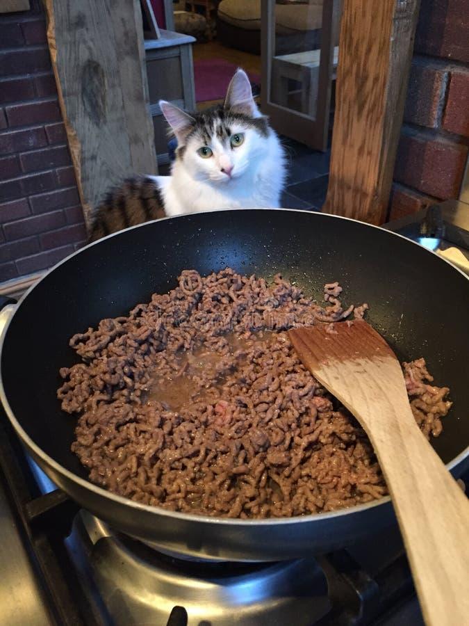 Katze, die beim Kochen hilft stockfotos