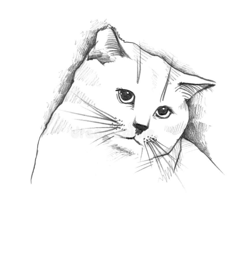 Download Katze, die Bleistiftskizze stock abbildung. Illustration von einfachheit - 12201761