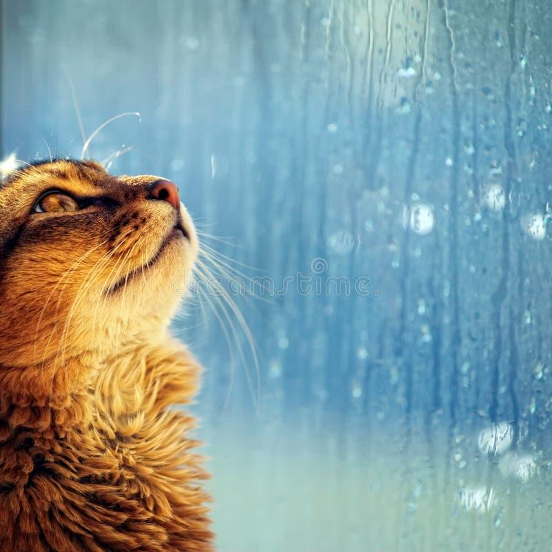 Katze, die in einem Fenster schaut stockbild