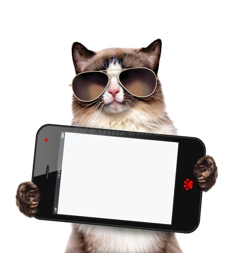 Katze, die einen leeren Smartphone hält stockfoto