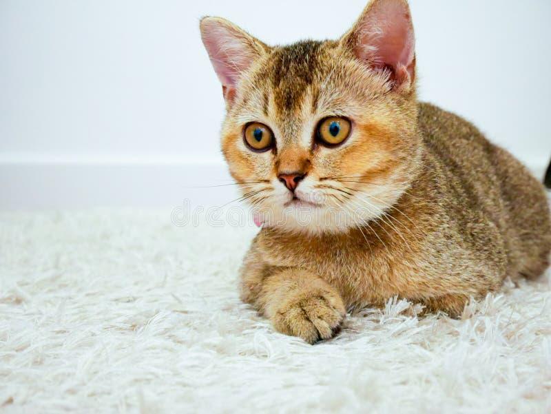 Katze, die etwas betrachtet stockbild