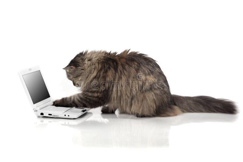 Katze, die für Laptop arbeitet lizenzfreies stockbild