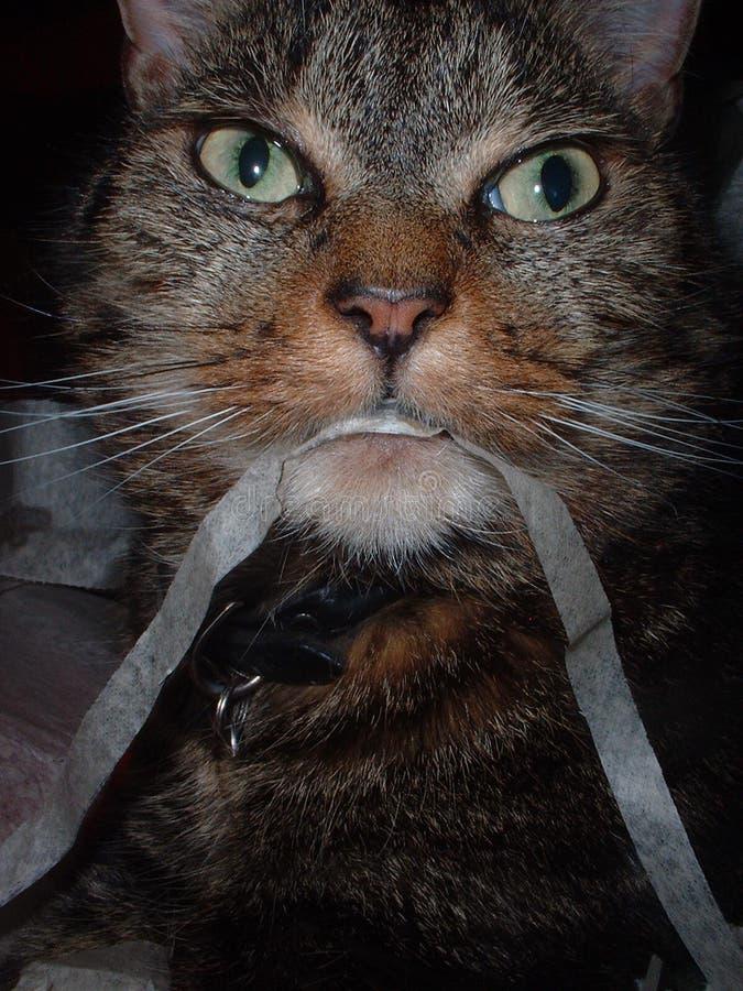 Katze, Die Farbband Isst Stockfotos