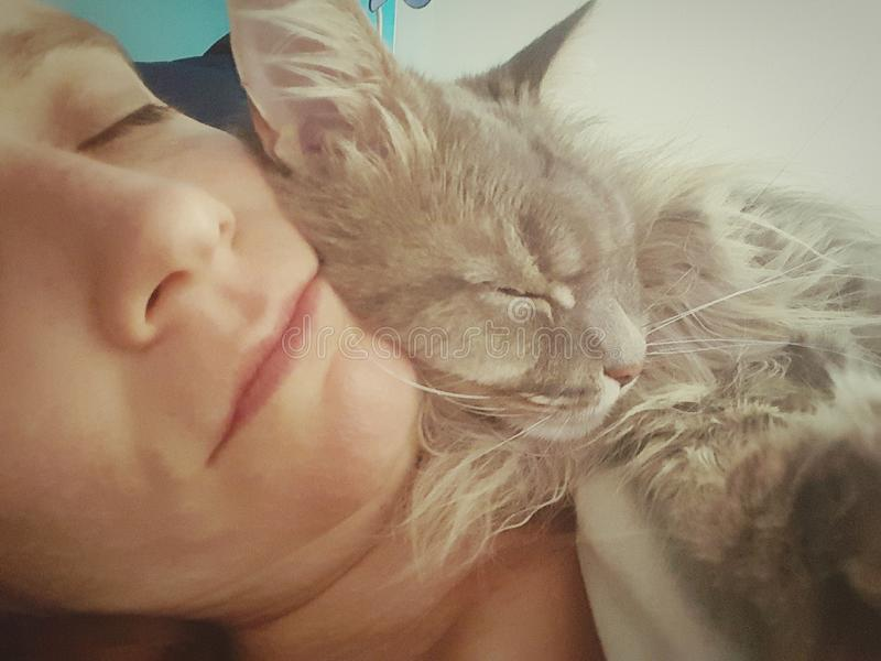 Katze, die Frau sich anschmiegt stockfoto