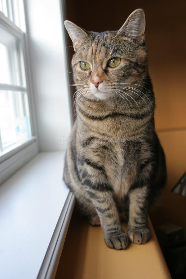 Katze, die heraus Fenster schaut stockbilder