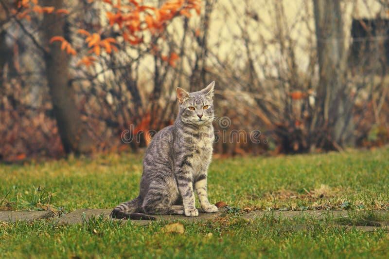 Katze, die im bunten Garten sitzt lizenzfreies stockbild