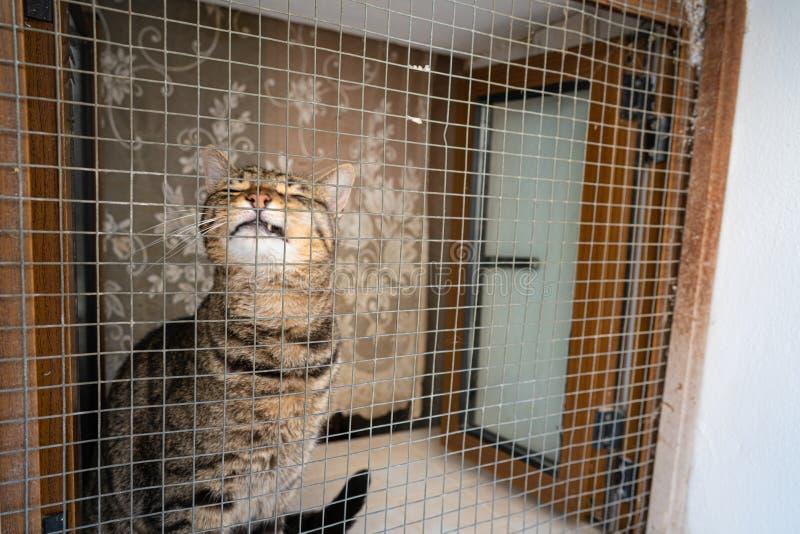 Katze, die im Fenster von Ibiza verkratzt lizenzfreie stockbilder