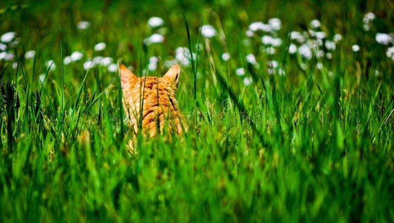 Katze, die im Garten des Grases und der Blumen sitzt lizenzfreie stockfotos
