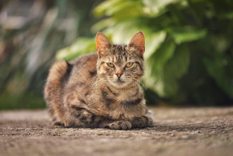 Katze, die im Garten sitzt lizenzfreies stockfoto