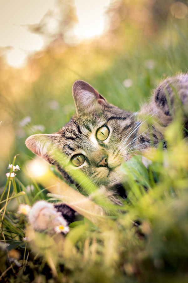 Katze, die im Gras spielt lizenzfreies stockbild