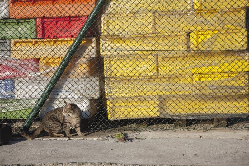 Katze, die im Hafen lebt lizenzfreies stockfoto