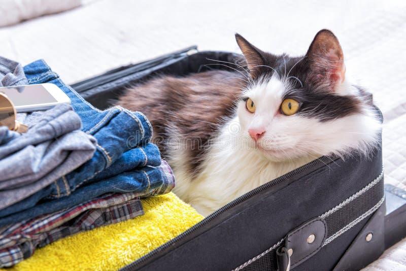 Katze, die im Koffer sitzt lizenzfreie stockbilder