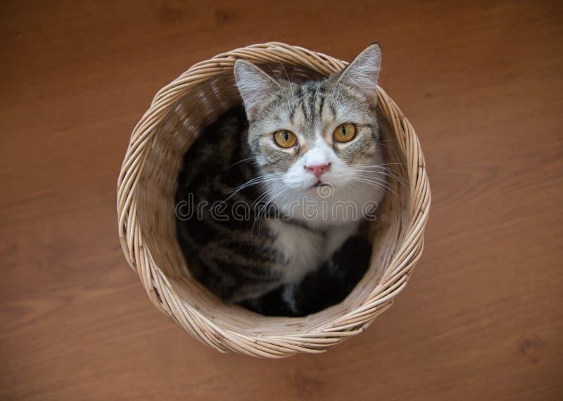Katze, die im Korb sitzt stockfotografie