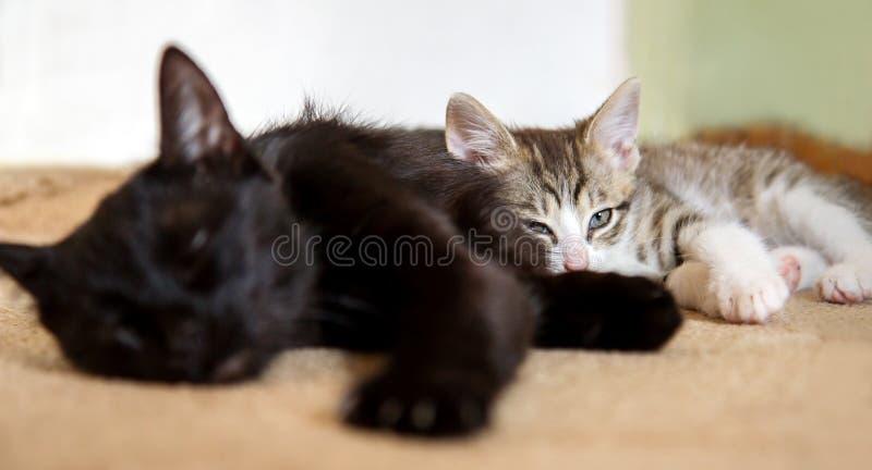 Katze, die mit ihrem Kätzchen schläft lizenzfreies stockbild