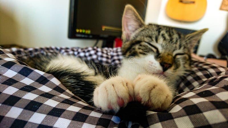 Katze, die mit ihren netten Tatzen ehrlich schläft stockbild