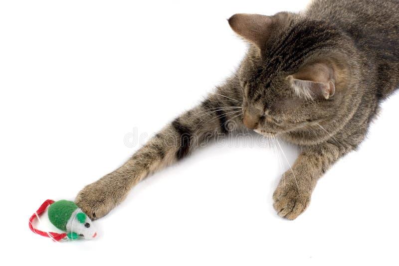 Katze, die mit Maus spielt stockbild