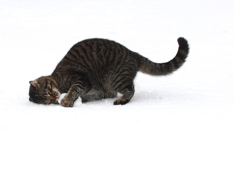 Katze, die mit Schneeball spielt lizenzfreie stockfotos