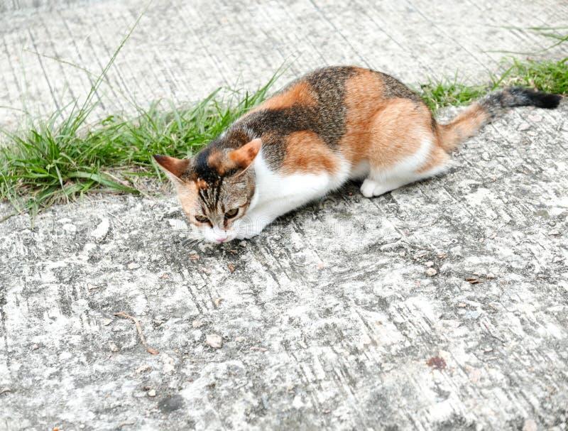 Katze, die nach Opfer sucht stockfotografie